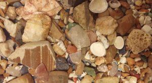 Rocks-Shells